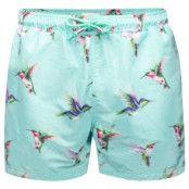 Panos Emporio Hummingbird Apollo Swim Shorts * Fri Frakt * * Kampanj *
